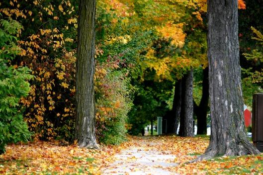 Fall photography @splattershare